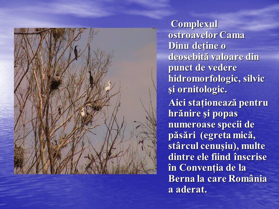 Complexul ostroavelor Cama Dinu deţine o deosebită valoare din punct de vedere hidromorfologic, silvic şi ornitologic. Aici staţionează pentru hrănire