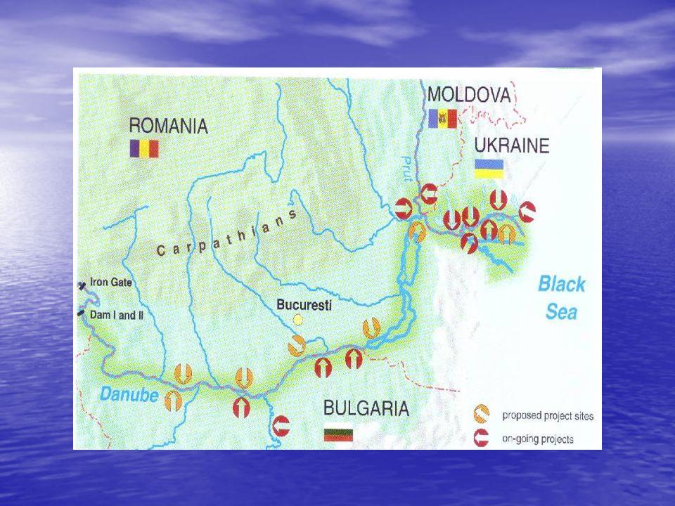 O surpriză plăcută pentru biologi a fost descoperirea unei populaţii de lopătari, specie rară pentru zona Dunării Inferioare.