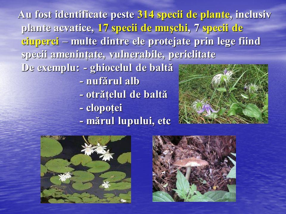 Au fost identificate peste 314 specii de plante, inclusiv plante acvatice, 17 specii de muşchi, 7 specii de ciuperci – multe dintre ele protejate prin