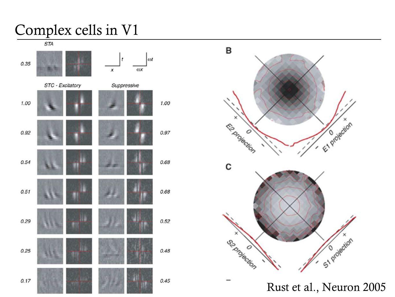 Complex cells in V1 Rust et al., Neuron 2005