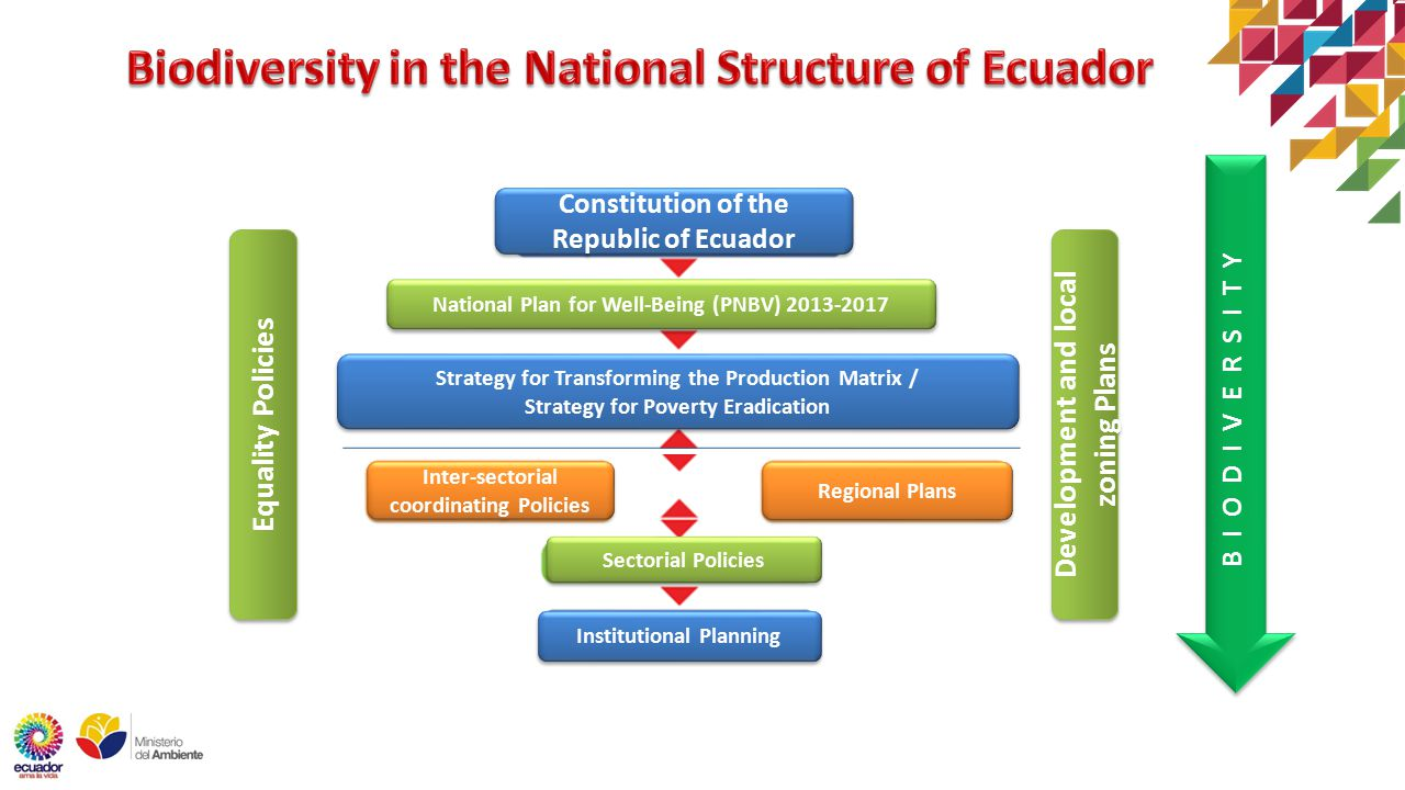 Constitution of the Republic of Ecuador National Plan for Well-Being (PNBV) Strategy for Transforming the Production Matrix / Strategy for Poverty Eradication Strategy for Transforming the Production Matrix / Strategy for Poverty Eradication Regional Plans Inter-sectorial coordinating Policies Institutional Planning Sectorial Policies B I O D I V E R S I T Y Equality Policies Development and local zoning Plans
