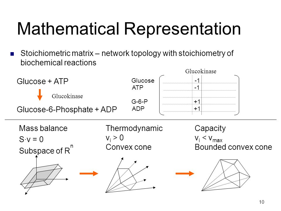 10 Mathematical Representation Stoichiometric matrix – network topology with stoichiometry of biochemical reactions Mass balance S·v = 0 Subspace of R