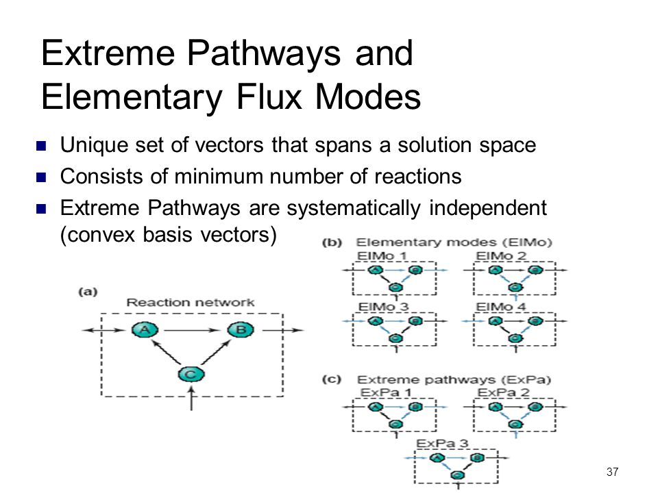 37 Extreme Pathways and Elementary Flux Modes Unique set of vectors that spans a solution space Consists of minimum number of reactions Extreme Pathwa