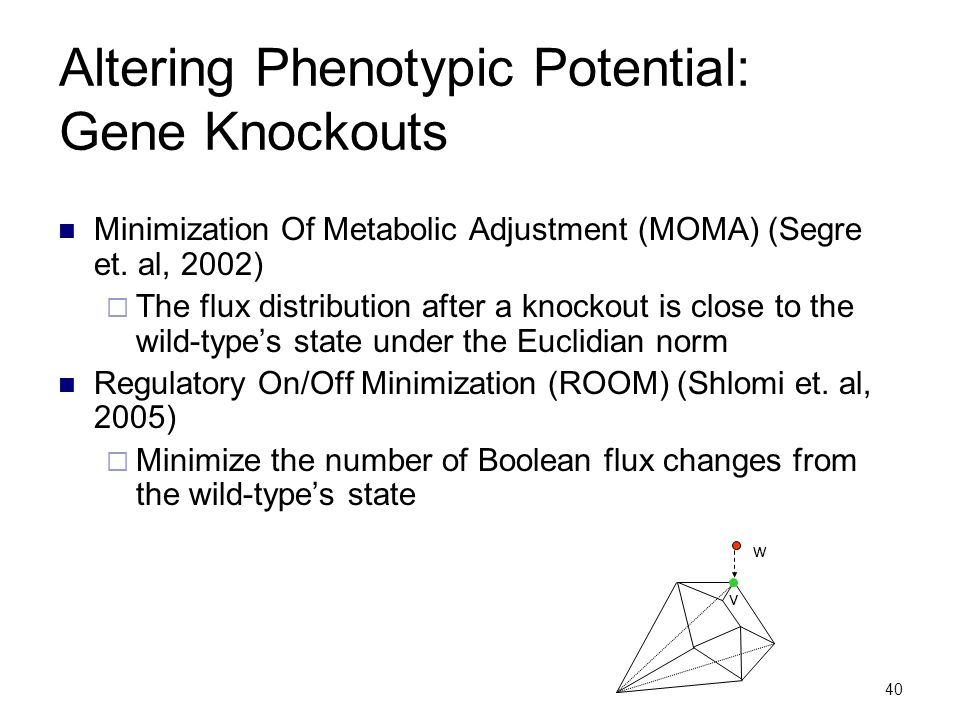40 Altering Phenotypic Potential: Gene Knockouts Minimization Of Metabolic Adjustment (MOMA) (Segre et. al, 2002)  The flux distribution after a knoc
