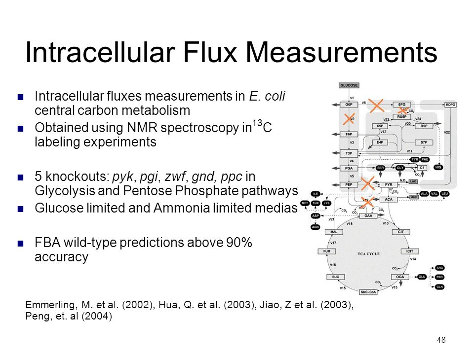 48 Intracellular Flux Measurements Intracellular fluxes measurements in E. coli central carbon metabolism Obtained using NMR spectroscopy in C labelin