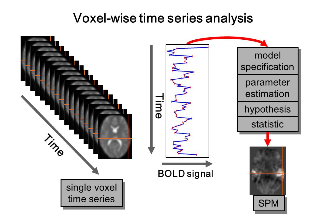 Time BOLD signal Time single voxel time series single voxel time series Voxel-wise time series analysis model specification model specification parame