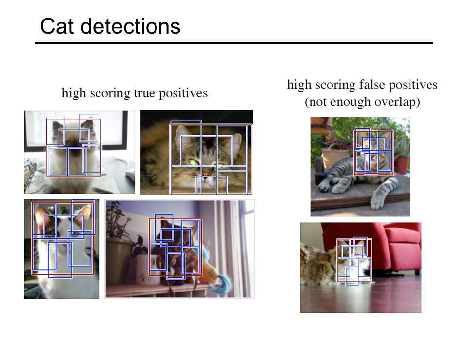 Cat detections