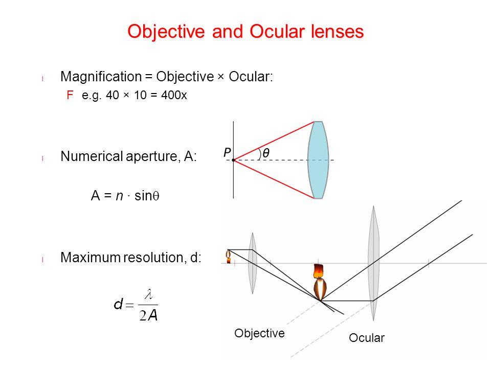 Objective and Ocular lenses l Magnification = Objective × Ocular: Fe.g. 40 × 10 = 400x l Numerical aperture, A: A = n ∙ sin  l Maximum resolution, d: