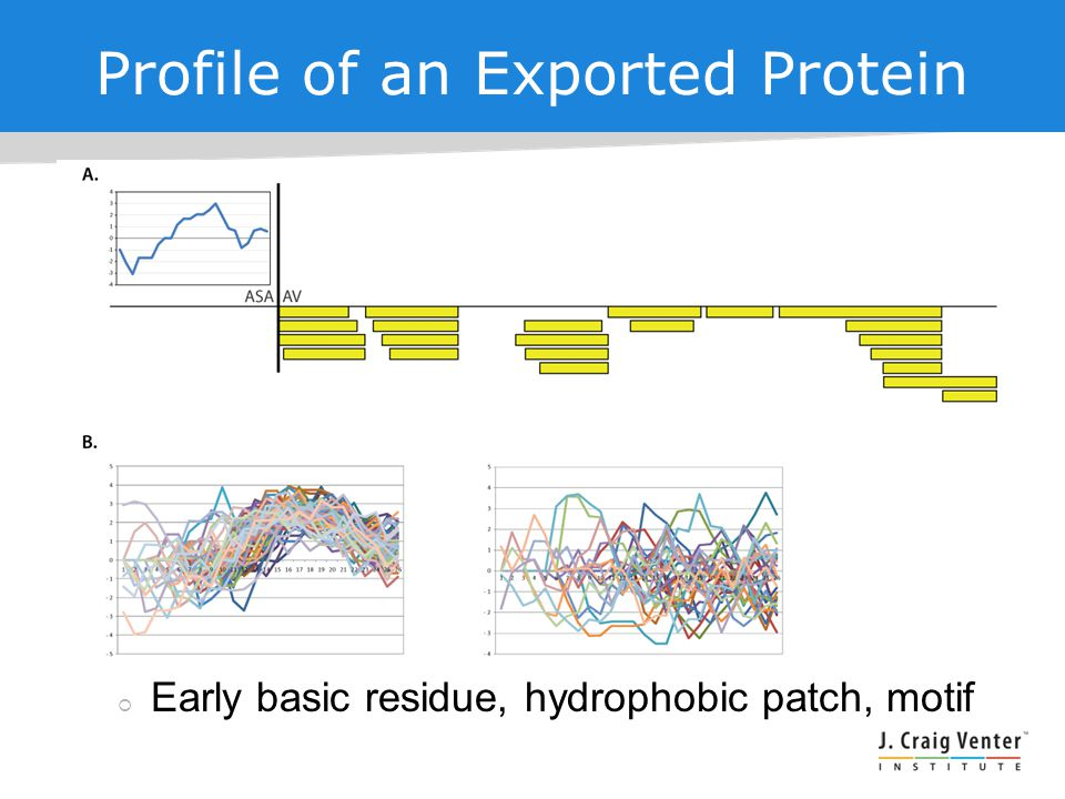 Profile of an Exported Protein  Early basic residue, hydrophobic patch, motif
