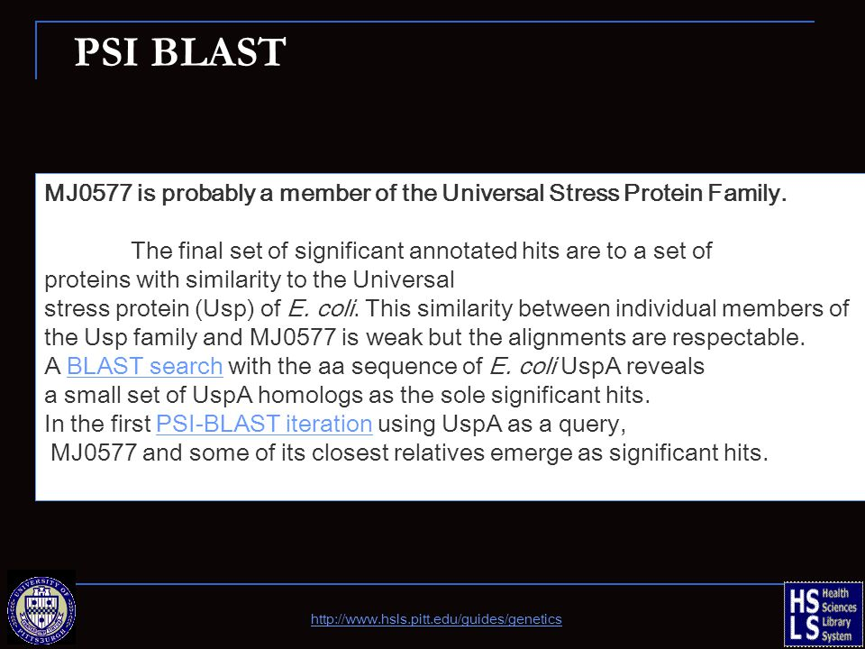 PSI BLAST MJ0577 is probably a member of the Universal Stress Protein Family.