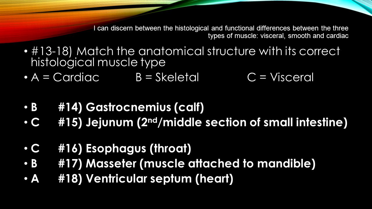 I can discern between the histological and functional differences between the three types of muscle: visceral, smooth and cardiac #13-18) Match the an