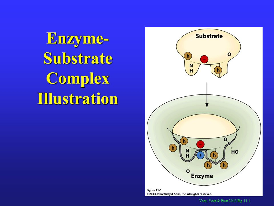 Electrostatic Catalysis The charge distribution around enzyme active sites appears to be arranged to stabilize the transition state of the catalyzed reactions.