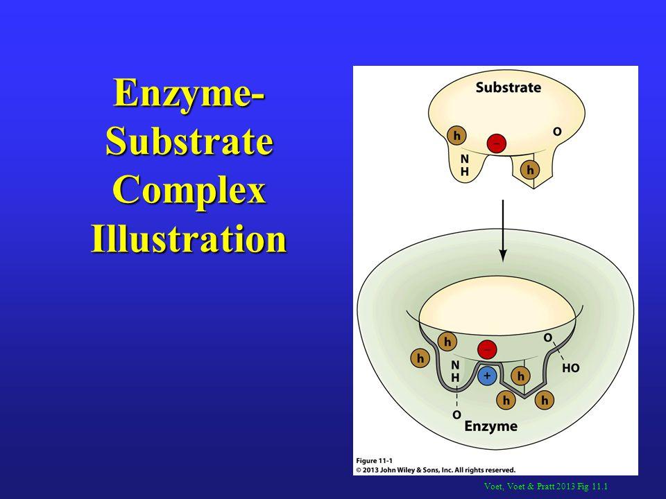Lehninger 2000 Figure 8.14a Bisubstrate Rx Steady-State Kinetic Analysis: Random BiBi