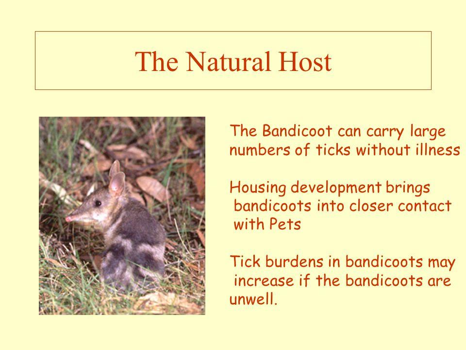 The Treatment of Tick Poisoning Charissa Smith BVSc DipAc Dip Herb Med Acacia Animal Care charissa@acaciaanimalcare.com 0418759237