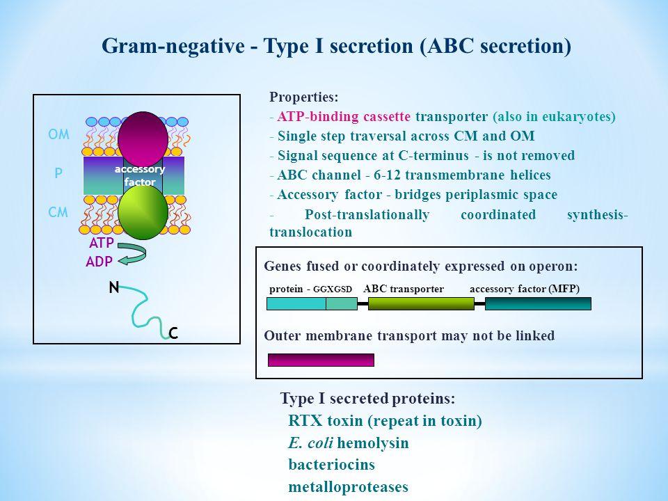 Gram-negative - Type I secretion (ABC secretion) Type I secreted proteins: RTX toxin (repeat in toxin) E. coli hemolysin bacteriocins metalloproteases