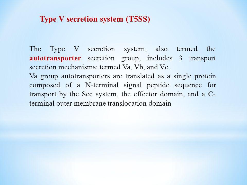 The Type V secretion system, also termed the autotransporter secretion group, includes 3 transport secretion mechanisms: termed Va, Vb, and Vc. Va gro