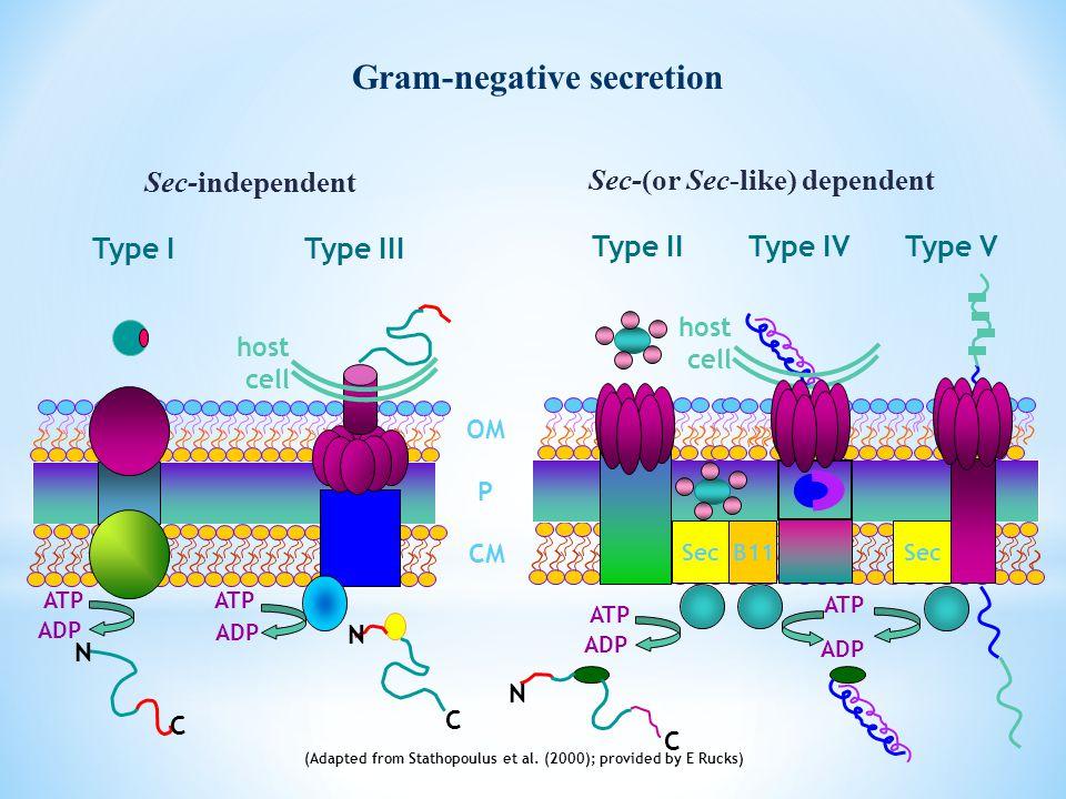 OM P CM Sec-(or Sec-like) dependent Sec-independent Type I ATP ADP N C N C Type III Type IIType IV Sec (Adapted from Stathopoulus et al. (2000); provi