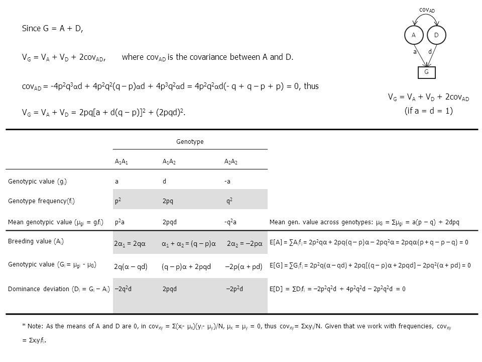 Since G = A + D, V G = V A + V D + 2cov AD, where cov AD is the covariance between A and D. cov AD = -4p 2 q 3 α d + 4p 2 q 2 (q – p) α d + 4p 3 q 2 α
