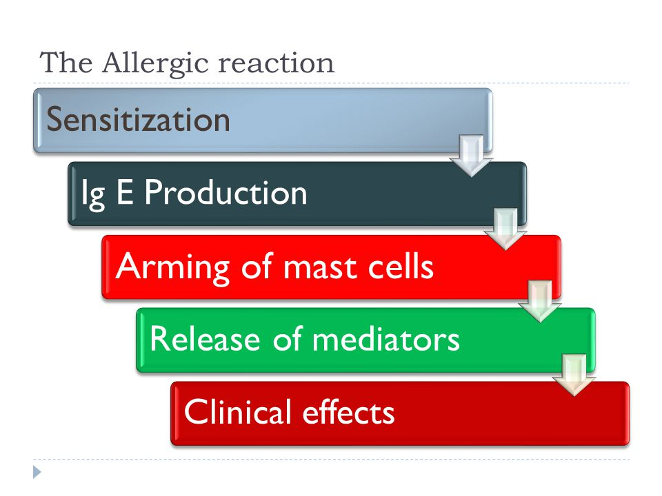 The Allergic reaction SensitizationIg E Production Arming of mast cells Release of mediatorsClinical effects