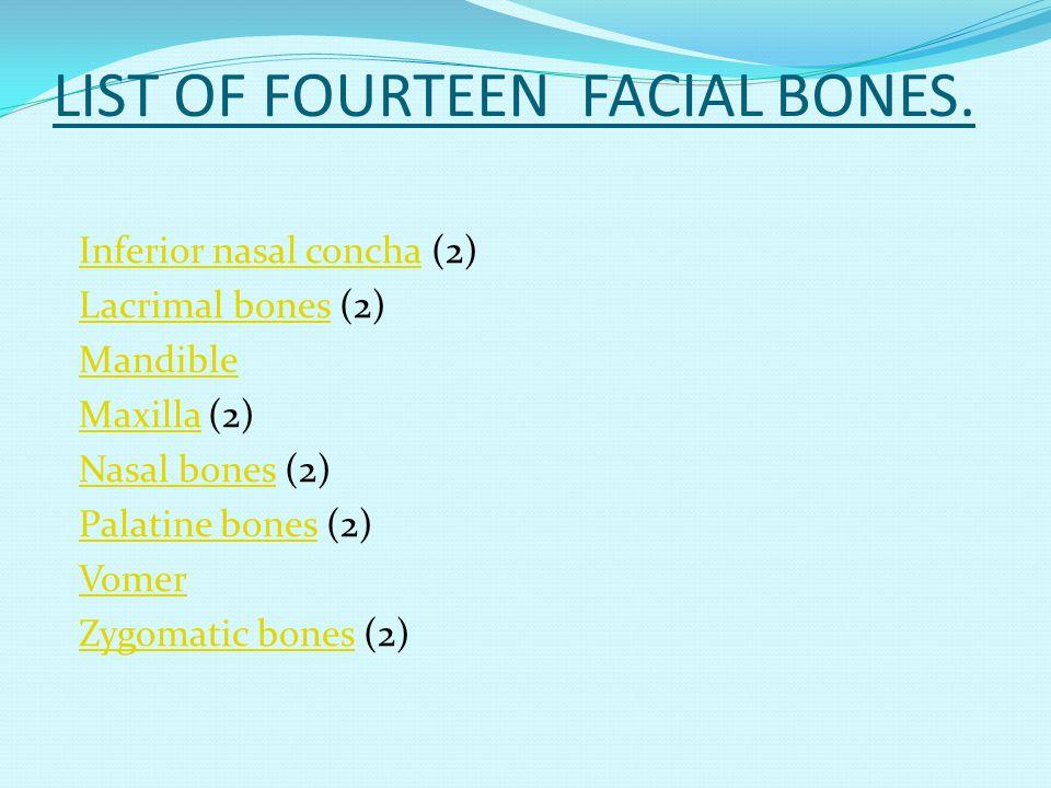 LIST OF FOURTEEN FACIAL BONES. Inferior nasal conchaInferior nasal concha (2) Lacrimal bonesLacrimal bones (2) Mandible MaxillaMaxilla (2) Nasal bones