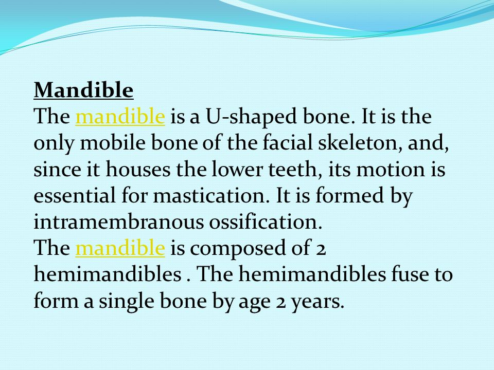 Mandible The mandible is a U-shaped bone. It is the only mobile bone of the facial skeleton, and, since it houses the lower teeth, its motion is essen