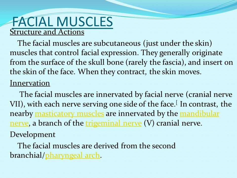 FACIAL MUSCLES Structure and Actions The facial muscles are subcutaneous (just under the skin) muscles that control facial expression. They generally