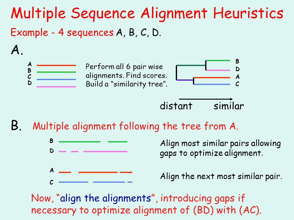 "Multiple Sequence Alignment Heuristics similar Perform all 6 pair wise alignments. Find scores. Build a ""similarity tree"". A. B. Multiple alignment fo"