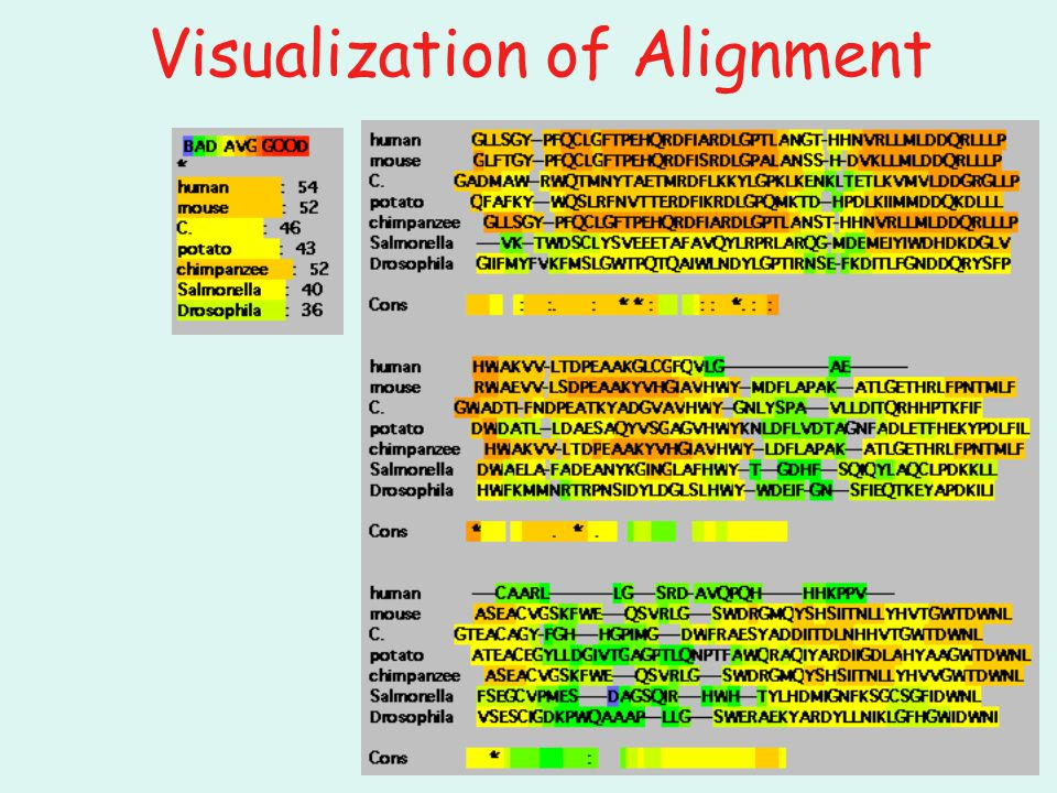 Visualization of Alignment