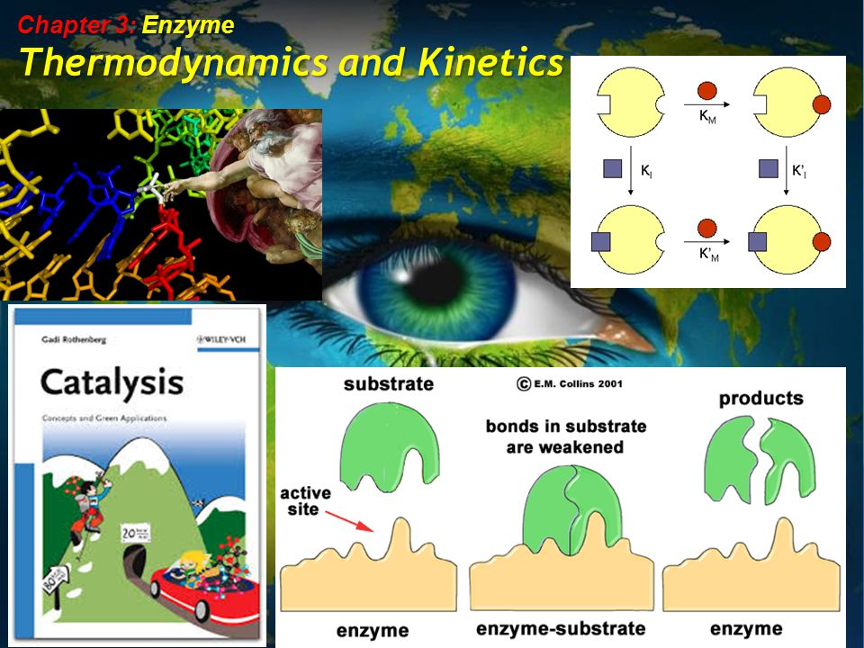 Chapter 3: Enzyme Thermodynamics and Kinetics