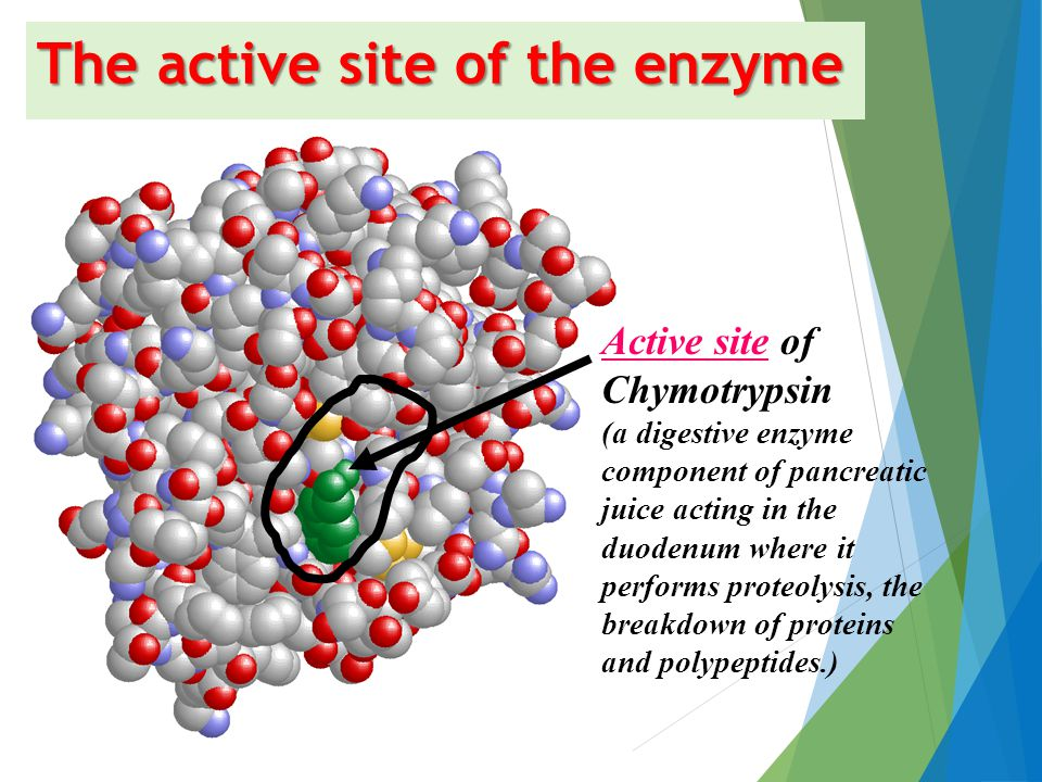 Active site of Enzyme Definition: The small 3D groove or pocket of an enzyme where substrate molecules bind and undergo a chemical reaction. The activ