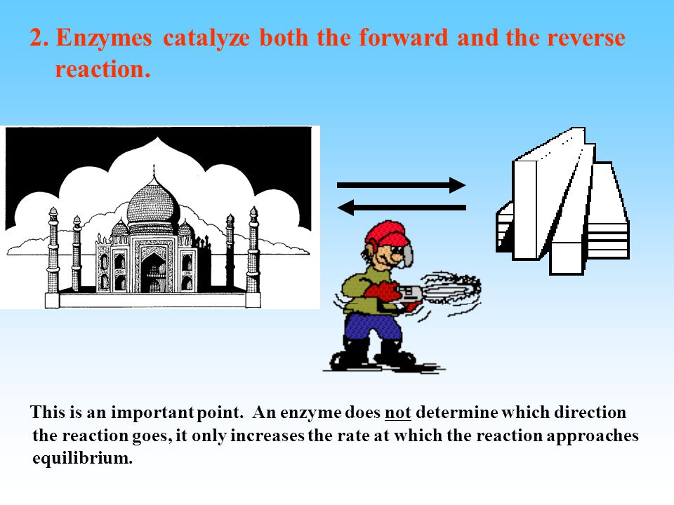 Important things to remember about enzymes (just like other catalysts) 1. Enzymes are not consumed or altered by the reaction they catalyze. Just as a
