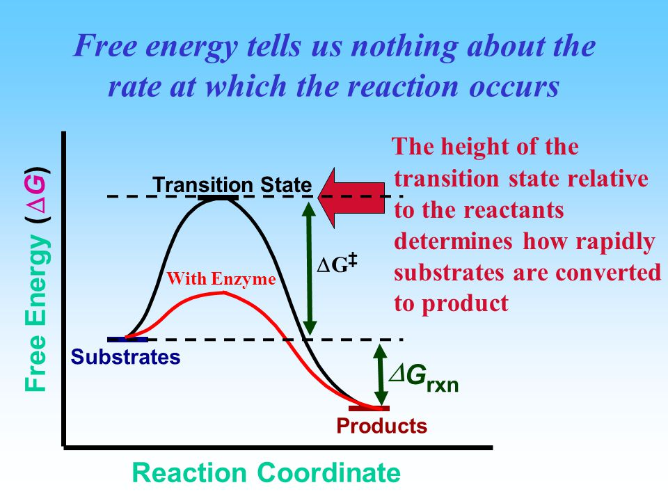 The Transition State  Understand the difference between  G and  G ‡ (Gibbs energy)  The overall free energy change for a reaction (∆G) is related
