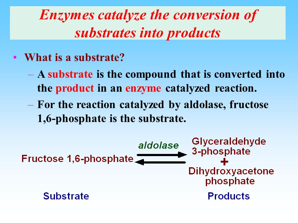 Components of the enzyme A poenzyme: the protein part of an enzyme Cofactor Inorganic: Metal ions Organic Holoenzyme Simple enzyme Conjugated enzyme Prosthetic group: emphasizes the nature of the binding of a cofactor to a protein (tight or covalent) Coenzymes: additional substance required for enzyme activity