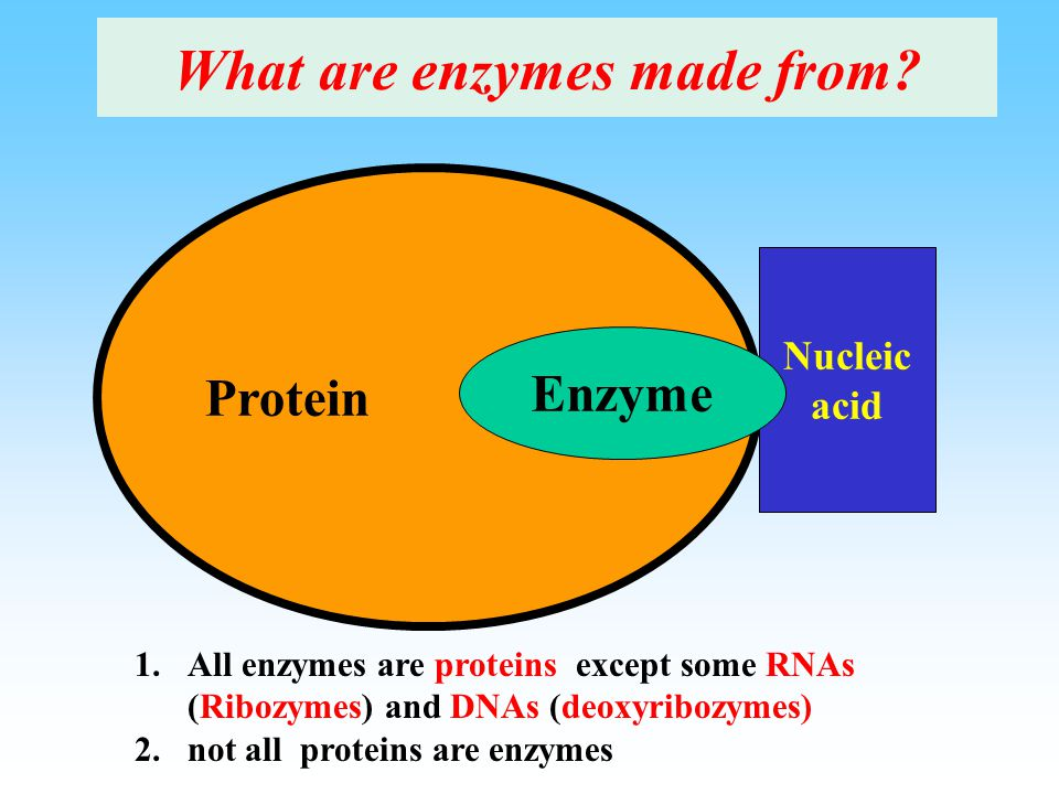 What are enzymes made from.