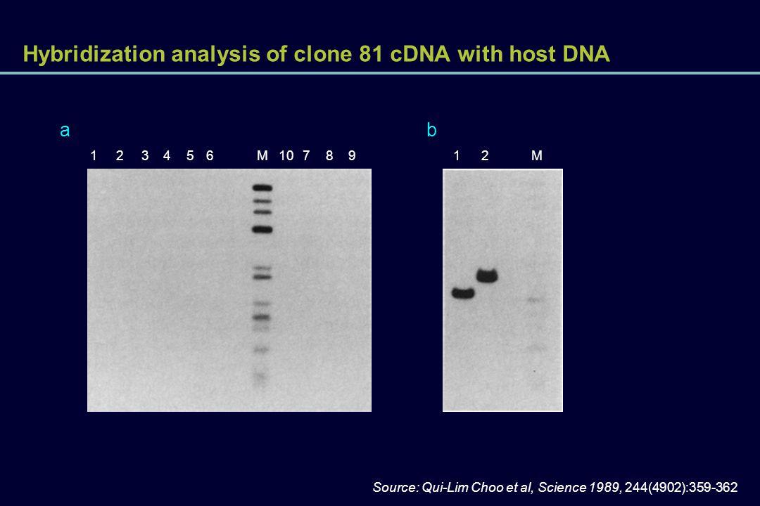 Hybridization analysis of clone 81 cDNA with host DNA Source: Qui-Lim Choo et al, Science 1989, 244(4902):359-362 123456M10 ab 78912M