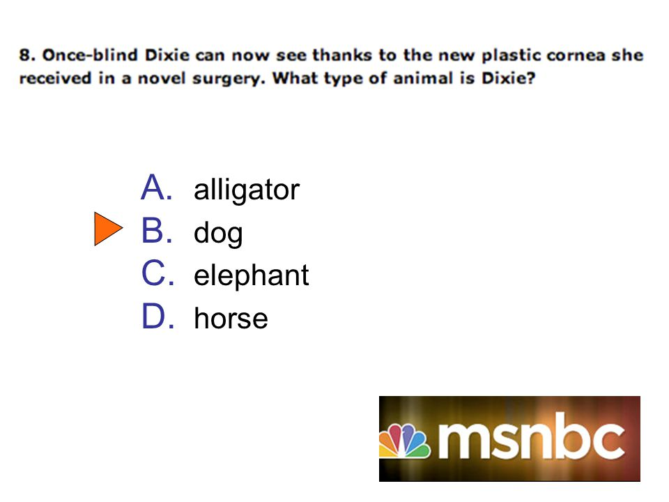 A. alligator B. dog C. elephant D. horse