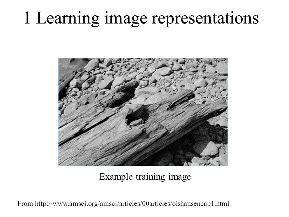 1 Learning image representations Example training image From http://www.amsci.org/amsci/articles/00articles/olshausencap1.html
