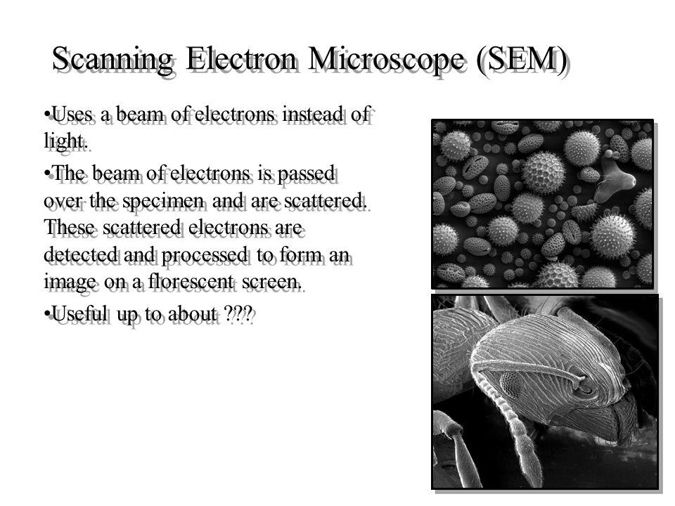 Mikroskope elektron Mikroskop elektron mempunyai 3 tipe,Mikroskop elektron mempunyai 3 tipe, –mikroskop elektron scanning (SEM)  untuk studi detil arsitektur permukaan sel (atau struktur renik lainnya), dan obyek diamati secara tiga dimensi.