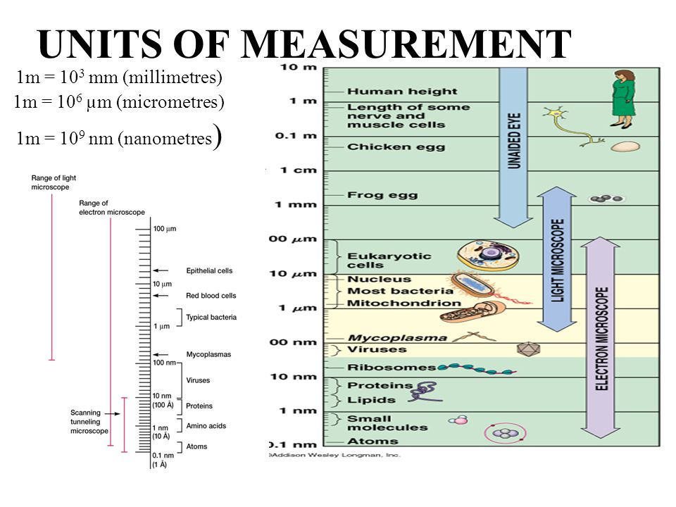 1. MIKROSCOPE 2. Haemositometer: Manual, software Dr.