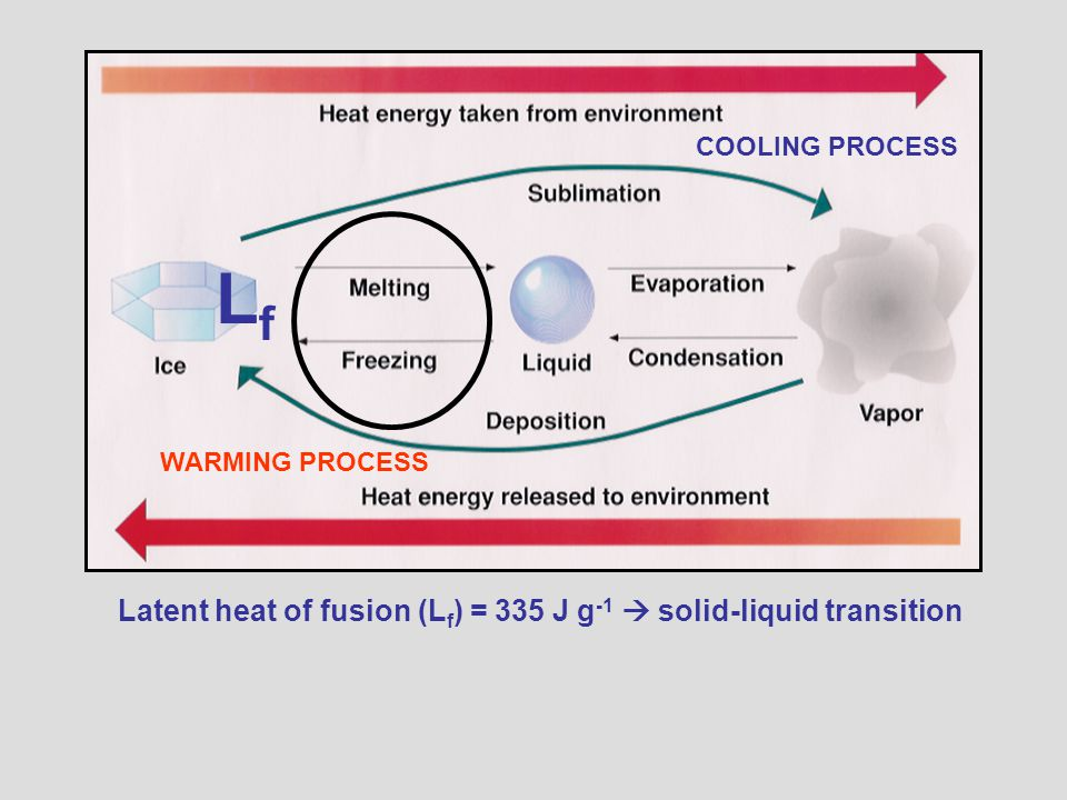 Latent heat of fusion (L f ) = 335 J g -1  solid-liquid transition COOLING PROCESS WARMING PROCESS LfLf