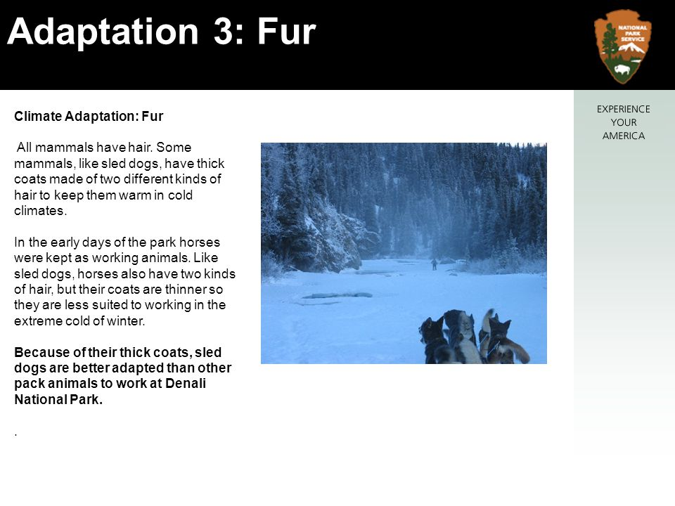 Climate Adaptation: Fur All mammals have hair.