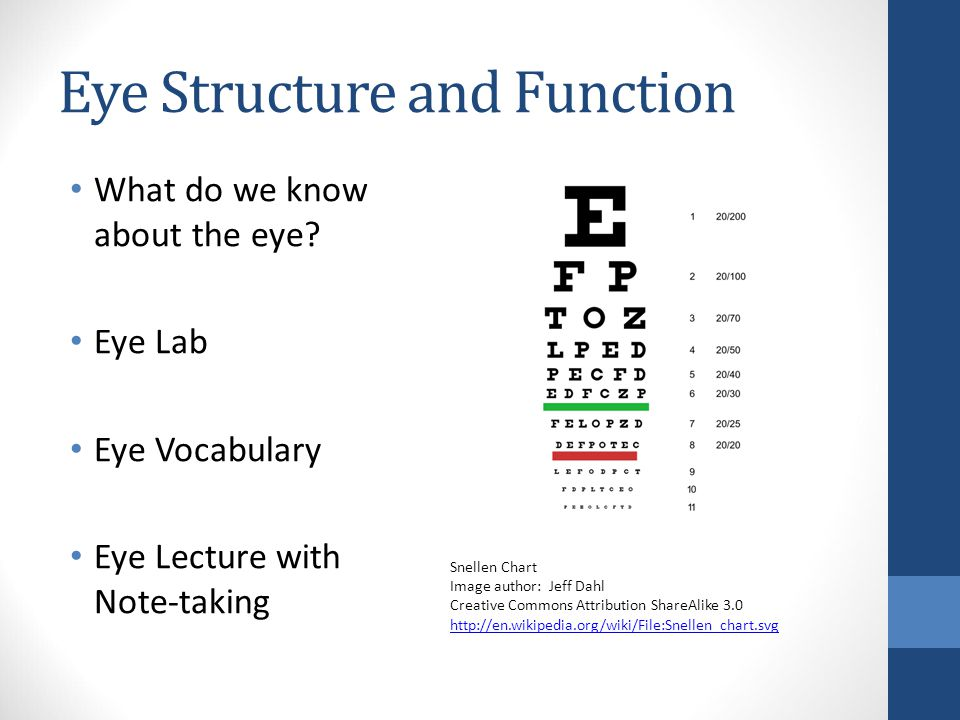 Eye Structure and Function What do we know about the eye.