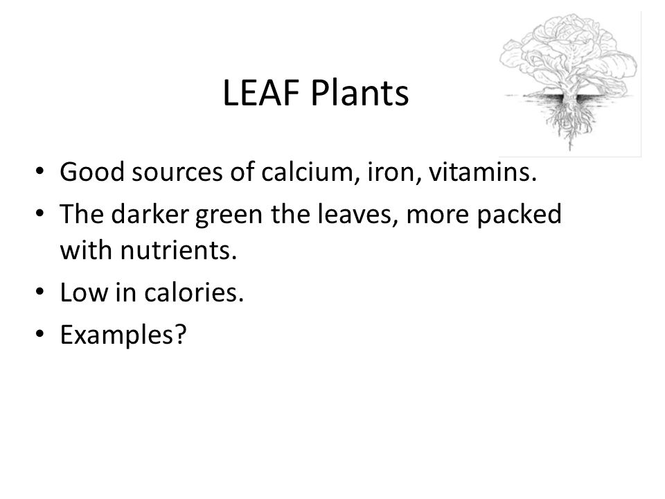 LEAF Plants Good sources of calcium, iron, vitamins.