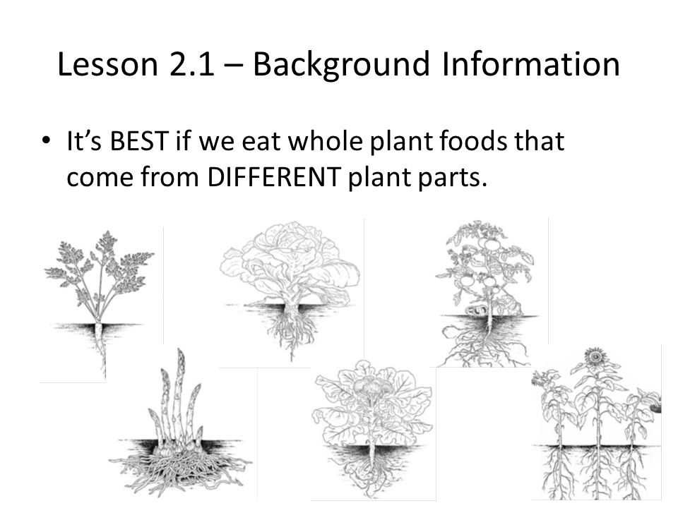 Lesson 2.1 – Background Information It's BEST if we eat whole plant foods that come from DIFFERENT plant parts.