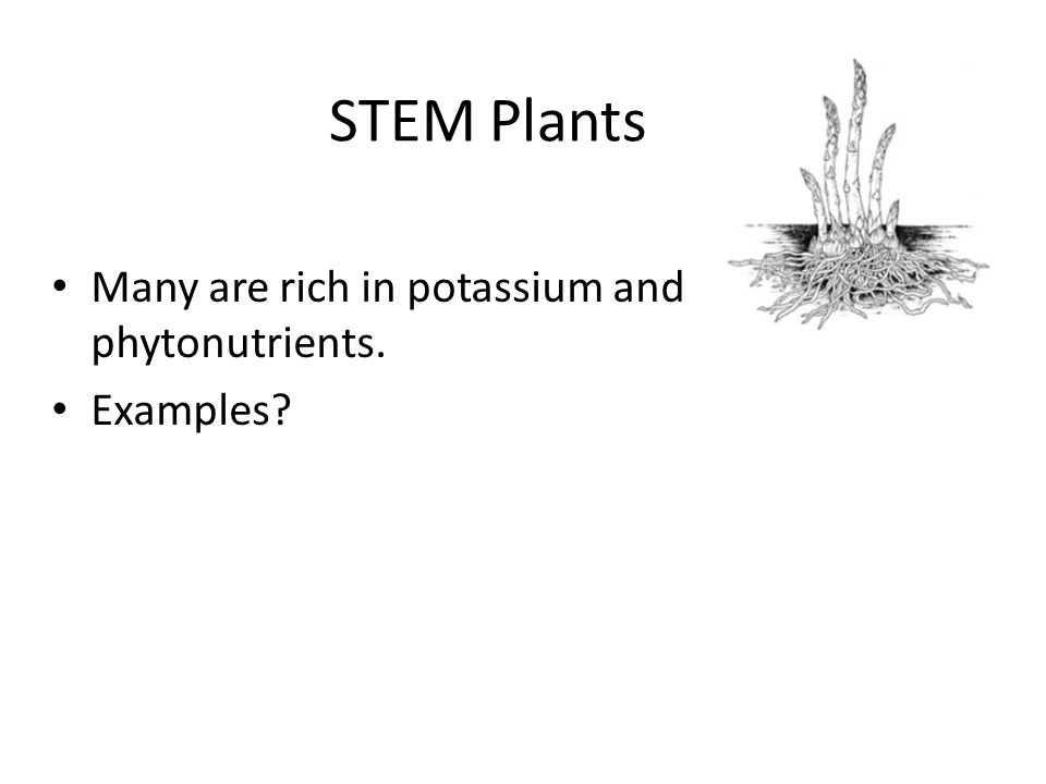 STEM Plants Many are rich in potassium and phytonutrients. Examples?