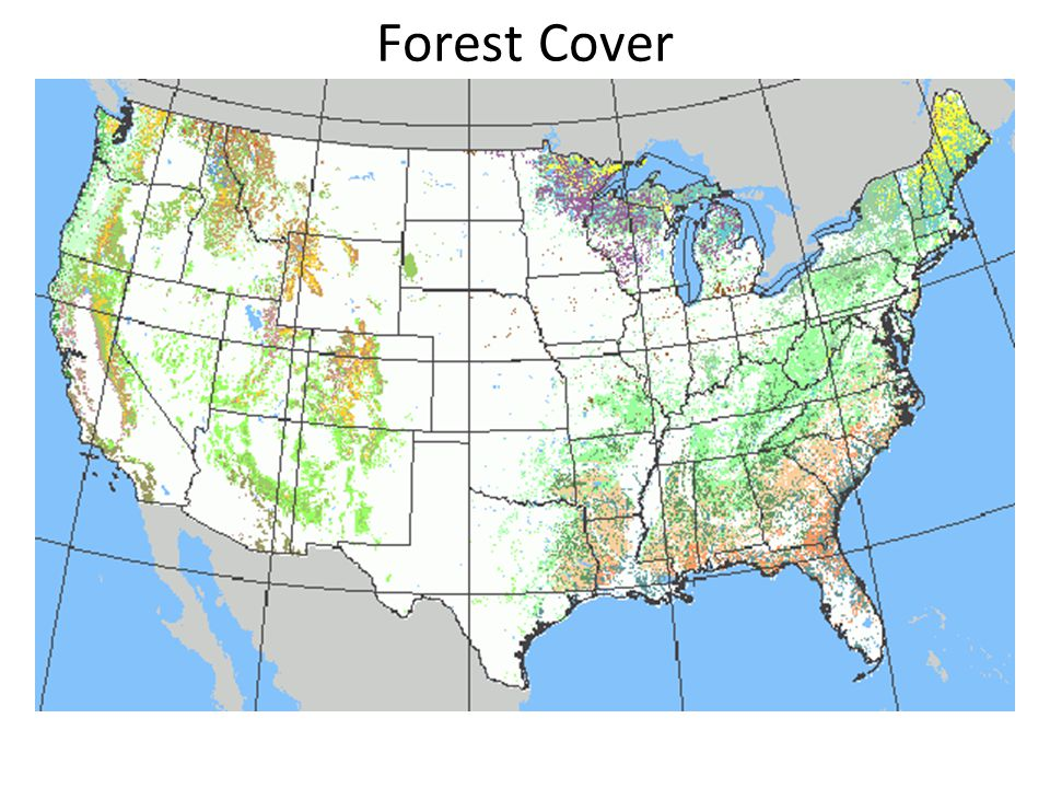 Forests and Rainfall Forests won't grow where P < 15 / yr Forest type depends strongly on rainfall quantity, type (snow, rain) and timing (summer, winter) –Forest type is driven by rainfall/temp.