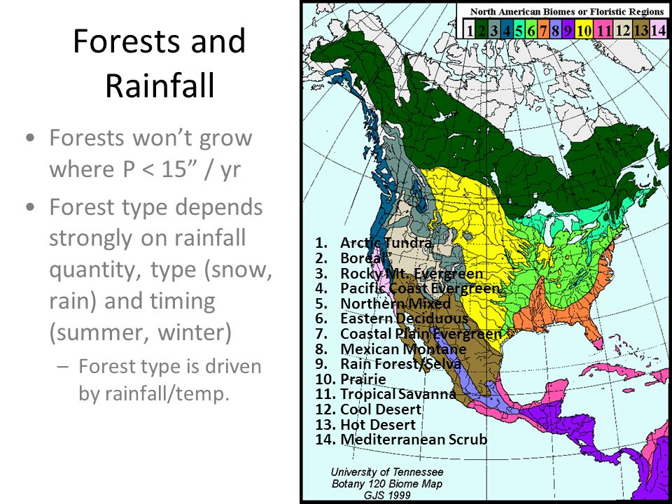 "Forests and Rainfall Forests won't grow where P < 15"" / yr Forest type depends strongly on rainfall quantity, type (snow, rain) and timing (summer, wi"