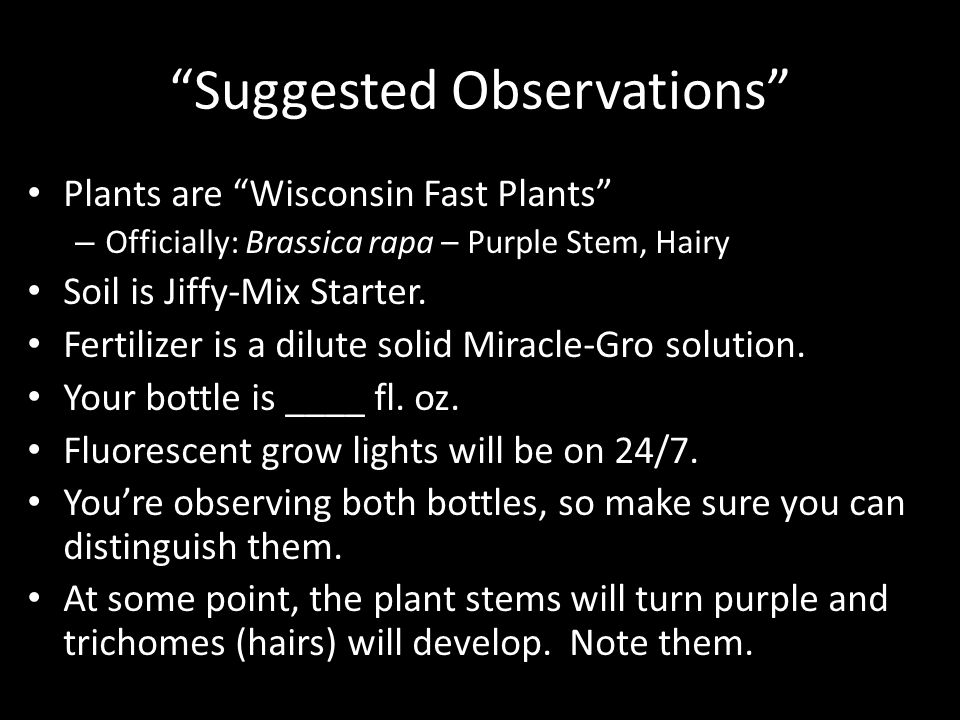 Suggested Observations Plants are Wisconsin Fast Plants – Officially: Brassica rapa – Purple Stem, Hairy Soil is Jiffy-Mix Starter.