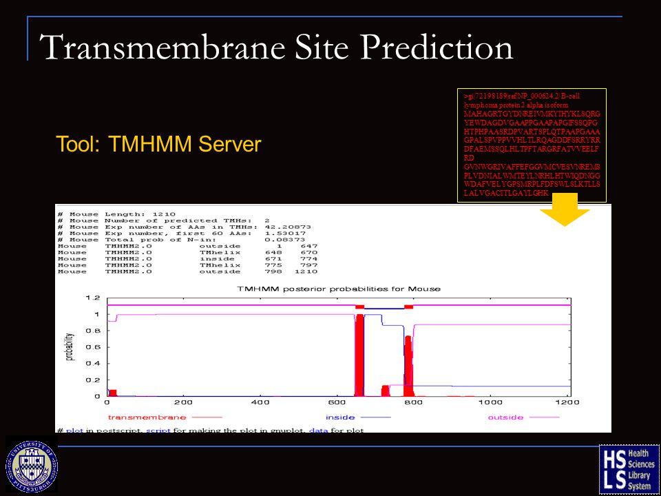 Transmembrane Site Prediction Tool: TMHMM Server >gi|72198189|ref|NP_000624.2| B-cell lymphoma protein 2 alpha isoform MAHAGRTGYDNREIVMKYIHYKLSQRG YEWDAGDVGAAPPGAAPAPGIFSSQPG HTPHPAASRDPVARTSPLQTPAAPGAAA GPALSPVPPVVHLTLRQAGDDFSRRYRR DFAEMSSQLHLTPFTARGRFATVVEELF RD GVNWGRIVAFFEFGGVMCVESVNREMS PLVDNIALWMTEYLNRHLHTWIQDNGG WDAFVELYGPSMRPLFDFSWLSLKTLLS LALVGACITLGAYLGHK