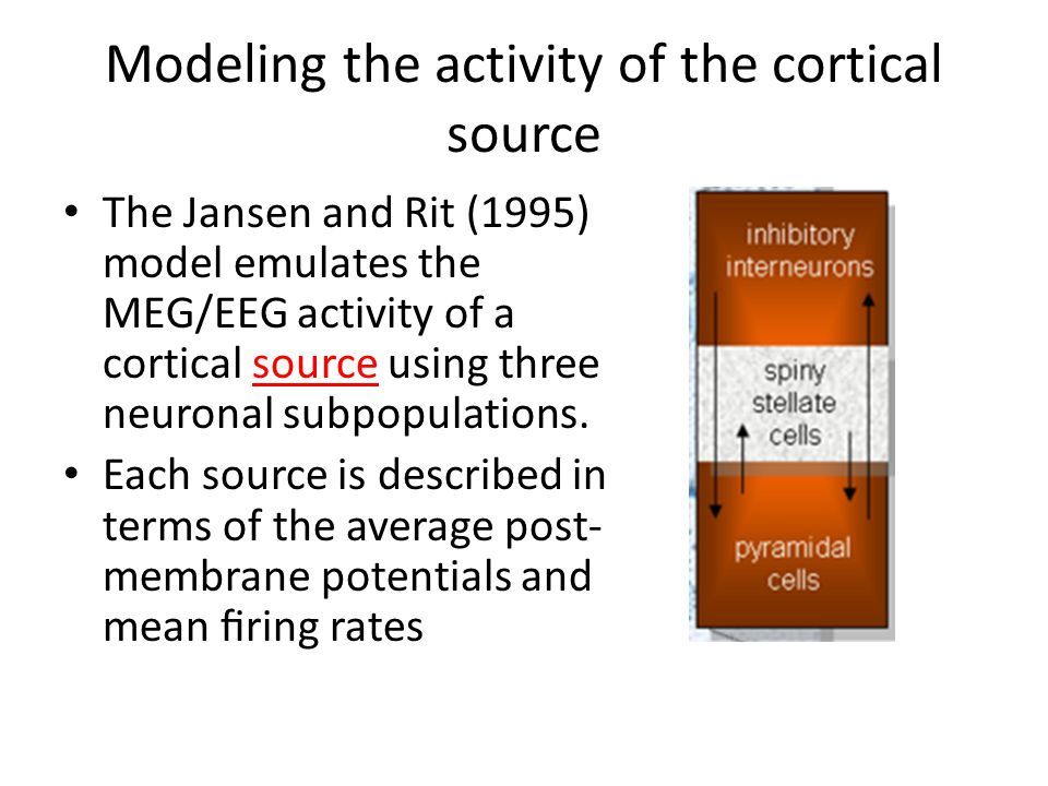 Modeling the activity of the cortical source The Jansen and Rit (1995) model emulates the MEG/EEG activity of a cortical source using three neuronal subpopulations.